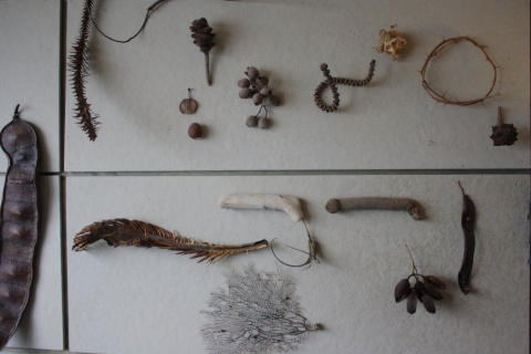 A bulletin board in Andre's studio displaying objects of nature, found in nature.